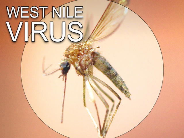 west-nile-virus Mosquito
