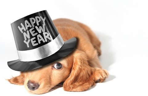New Year Dog Photo
