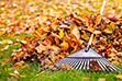 leaves on ground with a rake
